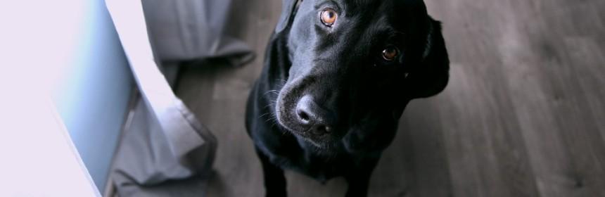 questioning dog