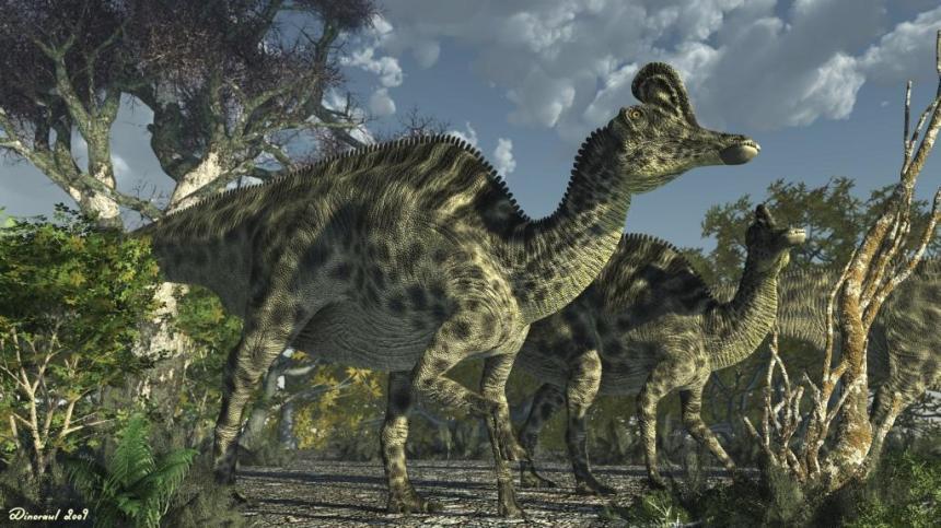Dinosaur Velafrons coahuilensis