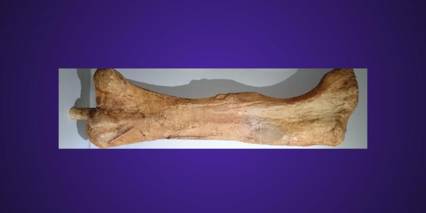 Dinosaurs Fossil Bone