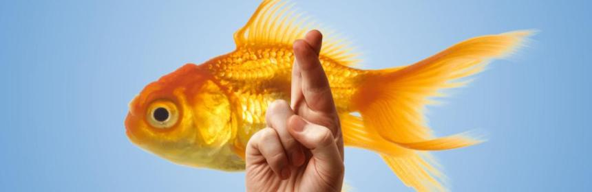 Fish and crossed fingers