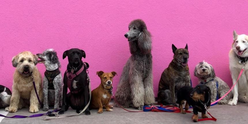 Dogs in line-up