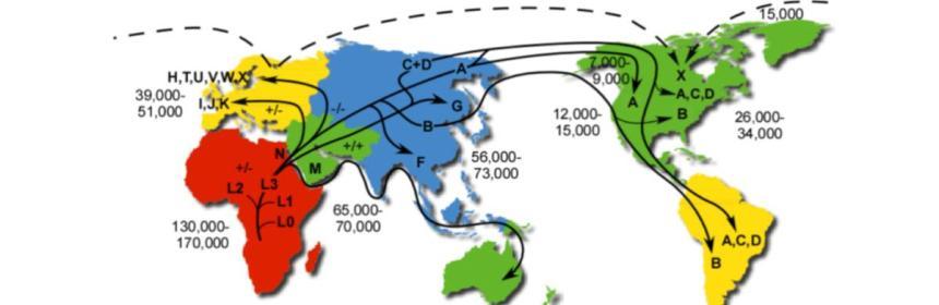 Human MtDNA migration map