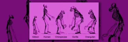 Evolved human